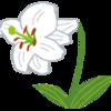 【春の花を「桃花位」に飾って、出逢いを呼び込む♡】