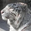 公園通り動物病院 blog