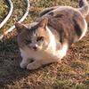 新型コロナ!猫から感染!猫で動物実験!東京大学医科学研究所が猫で感染実験!