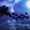 人生の質を高める「夜の習慣」5選