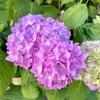 たまには気品溢れるお花の写真で癒されませんか