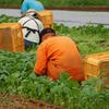 ビオ・マルシェは農業体験ができる食材宅配サービス