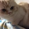 『ミルク、猫ブームで一瞬調子に乗る』の巻