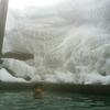 今週末は2泊でニセコの五色温泉へ!
