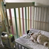 小児科退院と入院中の振り返り