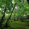京都・嵯峨野 - しっとり苔生す夏の祇王寺