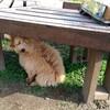 他の犬と仲良くできない我が家のマルプー