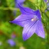 9月30日は「奥様の日」~奥さんに贈る花を花言葉から考える~