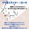 白い犬の13日間始まるよ(*^^*)全てあたりまえと受け止めないで感謝のこころを♪