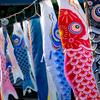 京都・静原 - 鯉泳ぐ静原の郷