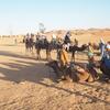 サハラ砂漠でラクダと満天の星