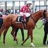 シルク2019年度募集馬情報と先週末のレース