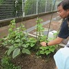 やまびこ:畑の作物のお世話