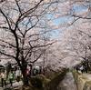 桜も終わりになりましたが・・・