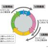 【医学部編入】生命科学講義・細胞の周期と増殖② ~細胞周期の制御メカニズム~