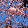 春を感じる〜