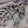 雪に埋もれた自転車