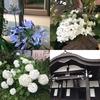 Dream Boxのお寺でマルシェVol.8