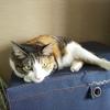 【愛猫日記】毎日アンヌさん#258