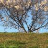 桜🌸の季節