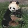 笹食ってる場合じゃない!?パンダの記事を書いてる間にソラチカルート封鎖!