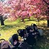 【今年の満開の桜を見て思い出すこと】