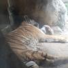 猛暑日の中、動物園へ