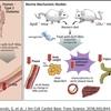 サクセンダが血管内炎症を抑制する根拠