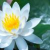 【12/19】京都・自死遺族の会 フリースペースの記録