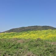 久しぶりの晴れ間 天王山に花見行幸。