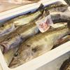 2017年11月29日 小浜漁港 お魚情報