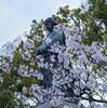 石川県から帰ると…そこは春だった!