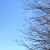 桜はまだかな【今日の空】