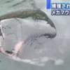 【TOCANA】【緊急警告】千葉・三重の「メガマウス」は大地震の前兆か? 7月下旬までにM6以上の地震?