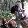 毎年恒例タケノコ掘り