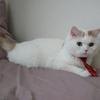 うちの猫様が超絶賢い&優しい