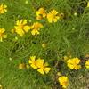 霊園風景 その65  「‥夏が大好きな花」