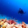 ラチャノイ島ダイビング!