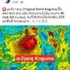 【画像あり】台風コグマのラオスへの影響