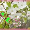 ああ、葉桜に・・・・
