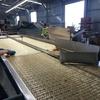 Bundabergでのファームジョブ(1月):トマトシェッドは長時間永遠に同じ作業!
