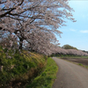 3月27日土曜日 見沼代用水で花見ラン