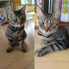 ワーママにペットは無謀か!?~猫を飼って4ヶ月、その負担具合を徹底検証