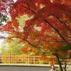 竜田公園の紅葉(11月下旬~12月初旬)