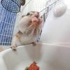 【ペット】シマリスを飼育するときにはどんなご飯を用意してあげる必要があるの?