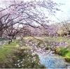 3月28(土)14時~17時/ZOOMオンライン・レイキ研鑽会開催します。
