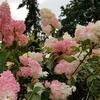 夏の終わりの花、冬の準備あれこれ