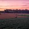 夏の上富良野町深山峠 爆焼けの朝のラベンダー畑