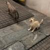 「ワット・ポー」でリアルなキャット・ファイト!【バンコクソイ散歩】