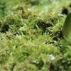 小さな小さな春がいっぱい ~自然増殖の植物たち